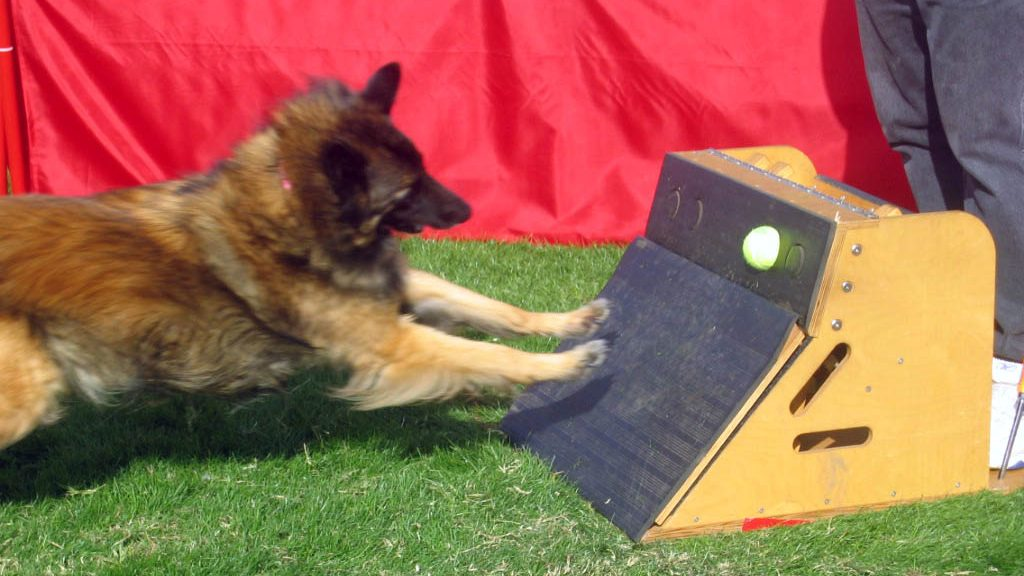 Flyball – Neues Sportangebot am Goldberg
